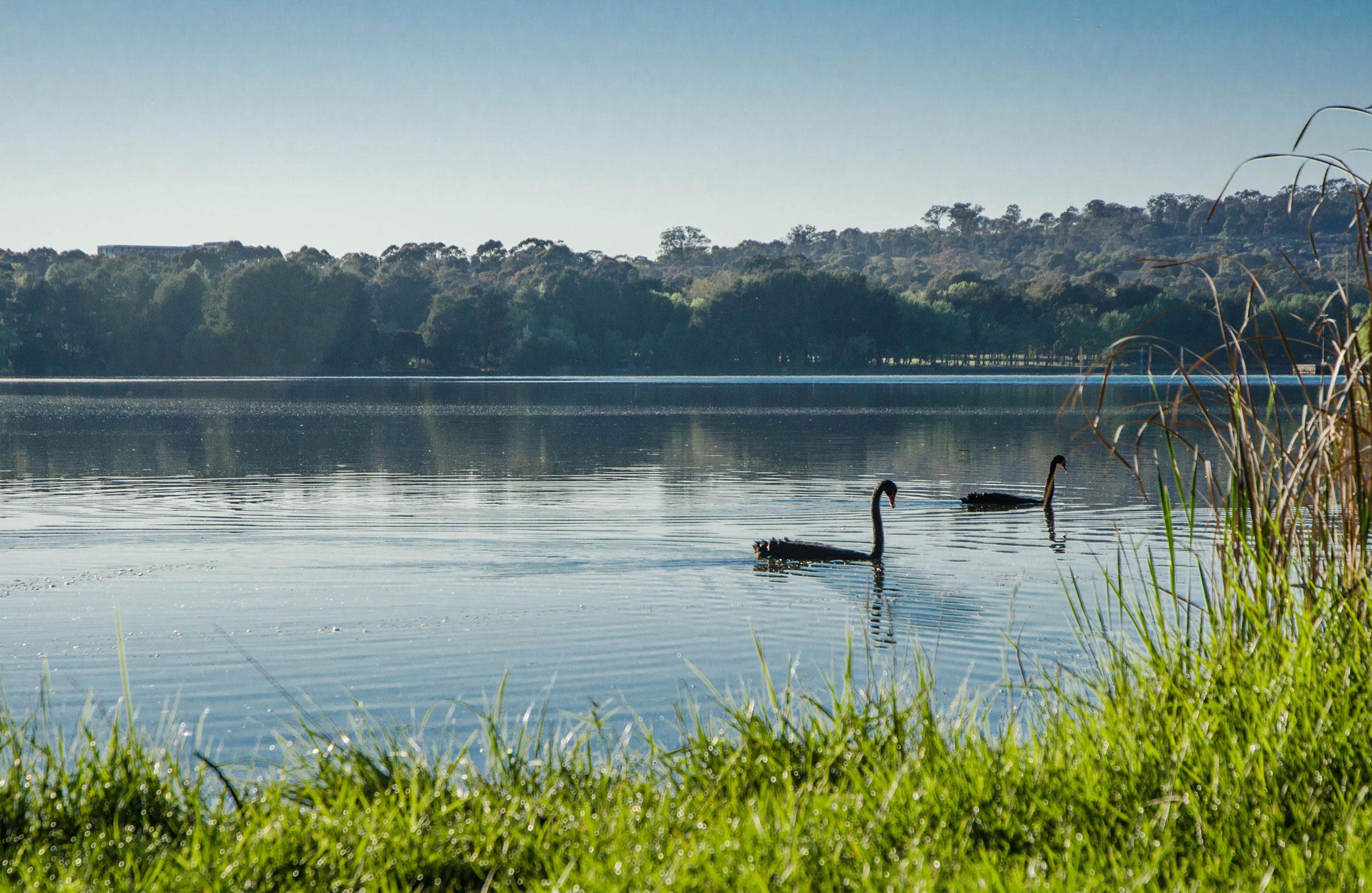 Paesaggi-Australia - DSC 0001 9 - Ginninderra Lake Australia - Ginninderra Lake Australia