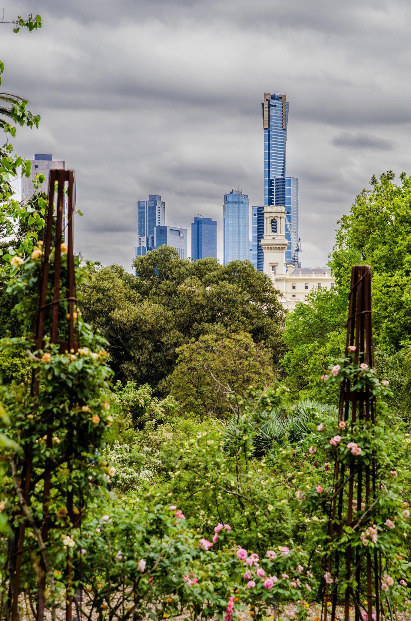 Paesaggi-Australia - DSC 0458 - Fotografo di paesaggio Melbourne Australia - Fotografo di paesaggio Melbourne Australia