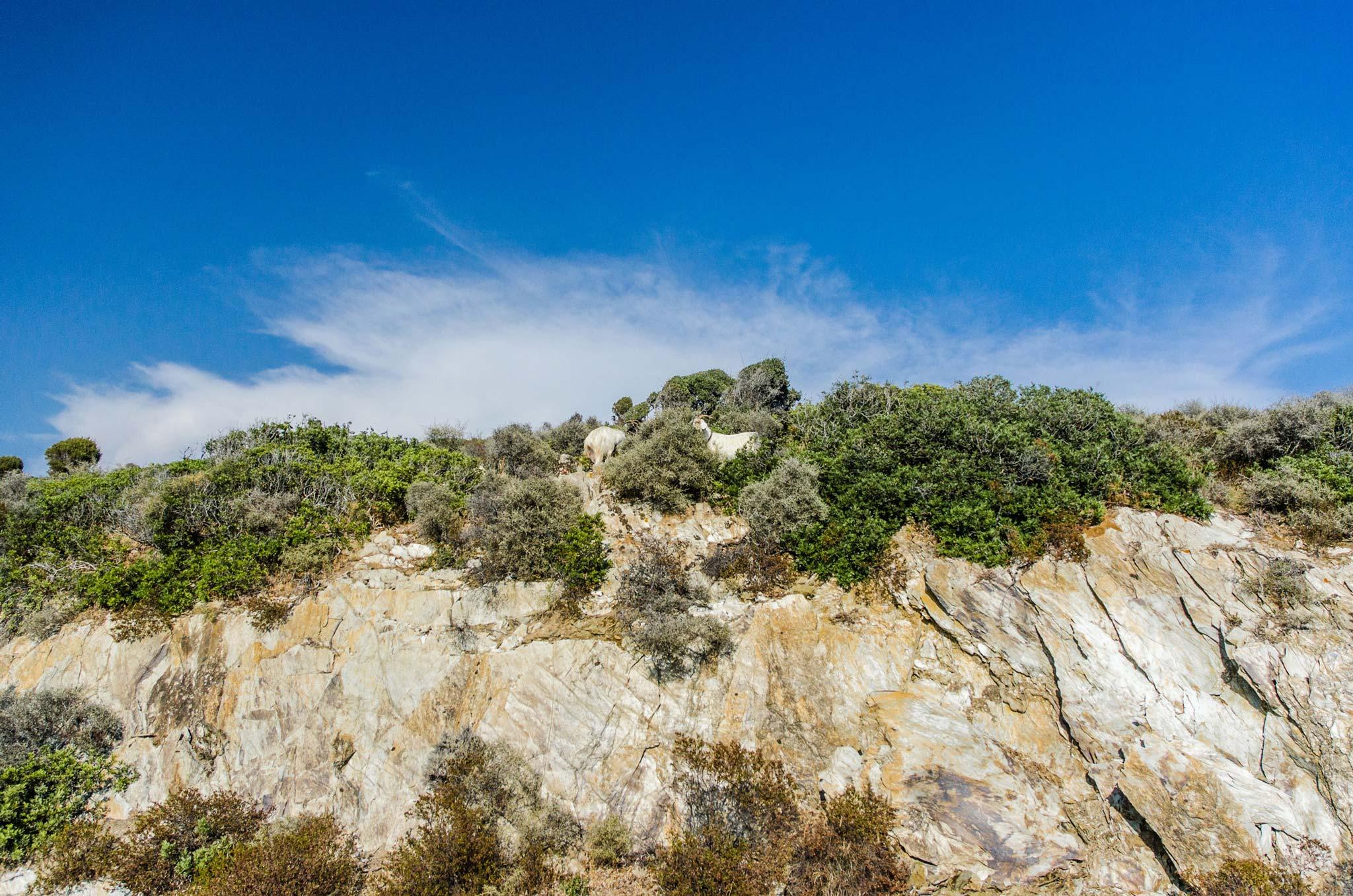 Paesaggi-Italia - DSC 9421 - Pecore-Sardegna-Fotografia-di.reportage - Pecore-Sardegna-Fotografia-di.reportage