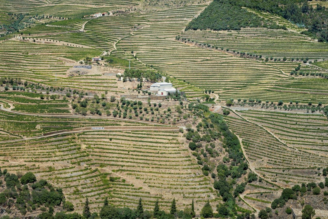 Paesaggi-Portogallo - DSC 2320 - Vigne del Douro - Vigne del Douro