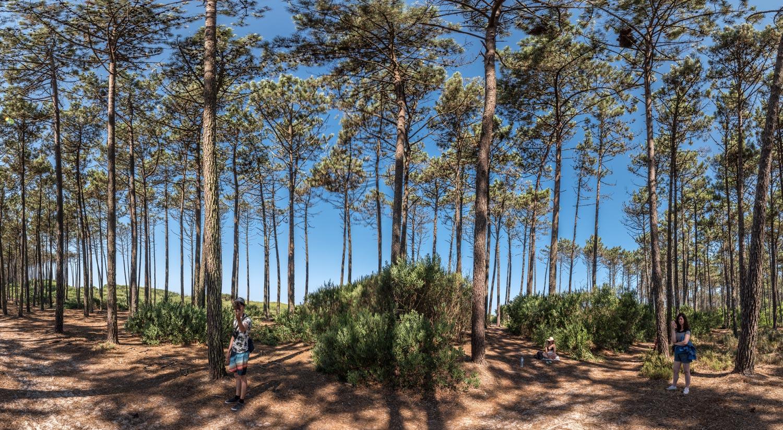 Paesaggi-Portogallo - DSC 2564 - Bosco Portogallo, Cortegaça - Bosco Portogallo, Cortegaça